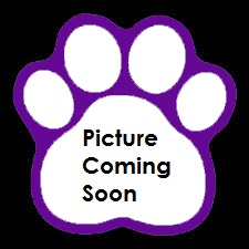 pic_coming_soon