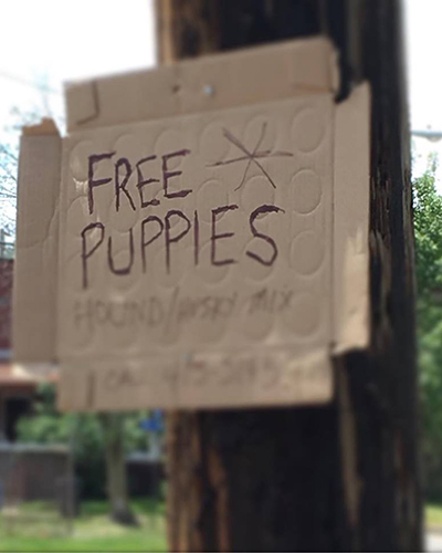 freepuppies